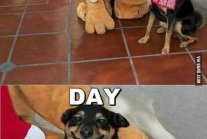 best day ever dog